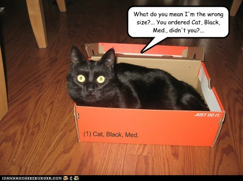 What do you mean I'm the wrong size?... You ordered Cat, Black, Med., didn't you?... (1) Cat, Black, Med.