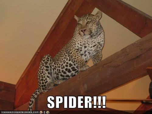 house spider scared leopards jumping - 6933288192