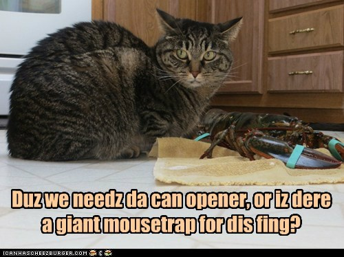 Duz we needz da can opener, or iz dere a giant mousetrap for dis fing?
