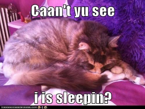 Caan't yu see  i is sleepin?