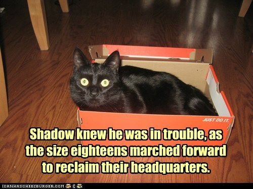 shoes reclaim box mine captions if it fits shoebox Cats