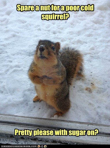 nut cold pretty please squirrels begging