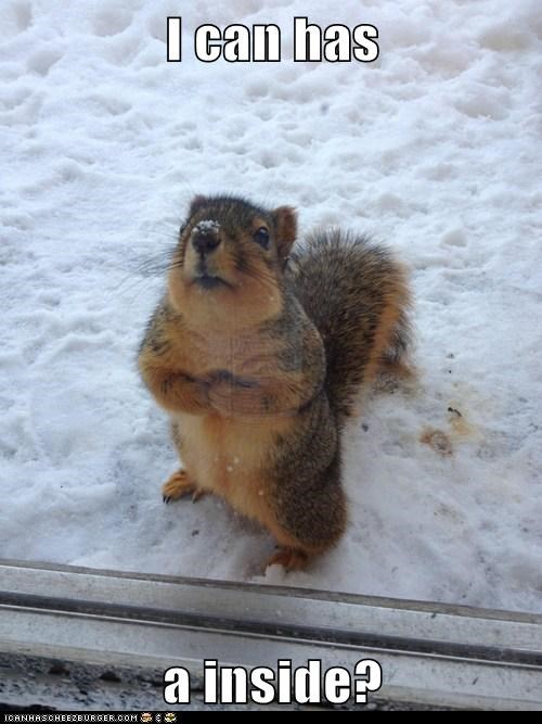 inside snow cold squirrel please i can has - 6933510144