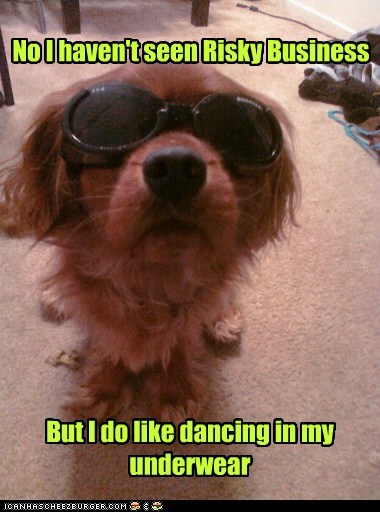 dancing,dogs,sunglasses,risky business,what breed,underwear