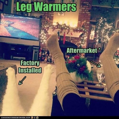 socks captions leg warmers legs Cats - 6933922048