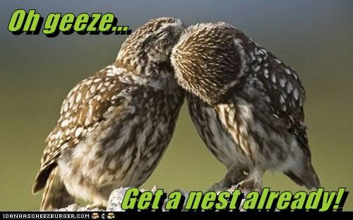 nest gross PDA get a room owls kissing - 6933956352