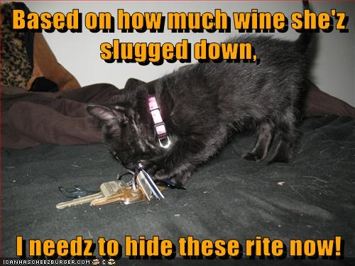 cat alcohol booze kitten wine kitty funny - 6934040320
