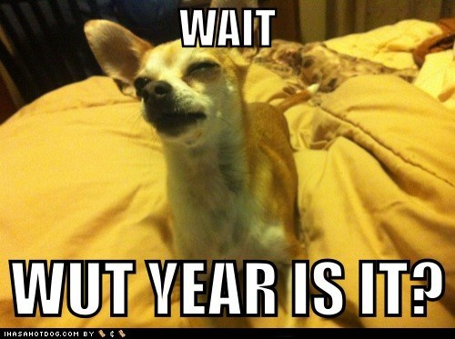 Stoned Chihuahua celebrates... a new year.. right?