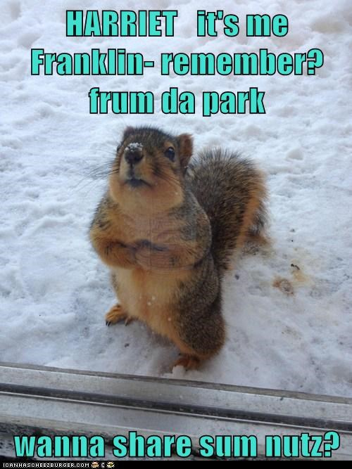 share,squirrel,park,nuts,remember