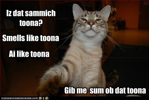 tuna smell captions eat sandwich food Cats toona
