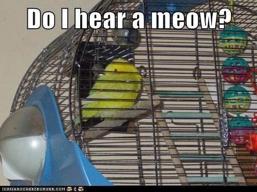 birds hearing birdcage meow angry - 6934422272