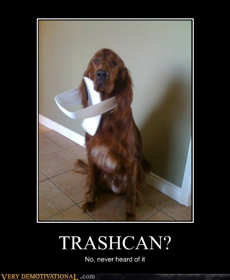 bad trashcan dogs