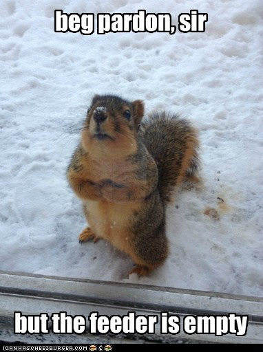 feeder,squirrels,empty,politeness,hungry food
