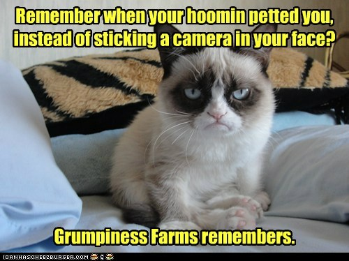 Remember when your hoomin petted you, instead of sticking a camera in your face? Grumpiness Farms remembers.