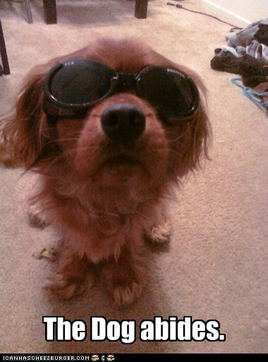the dude abides dogs goggles sunglasses the big lebowski what breed
