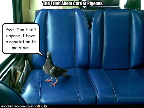 carrier pigions,don't tell anyone,reputation,maintain,pigeons,bus