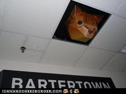 Ceiling cat is at a meeting