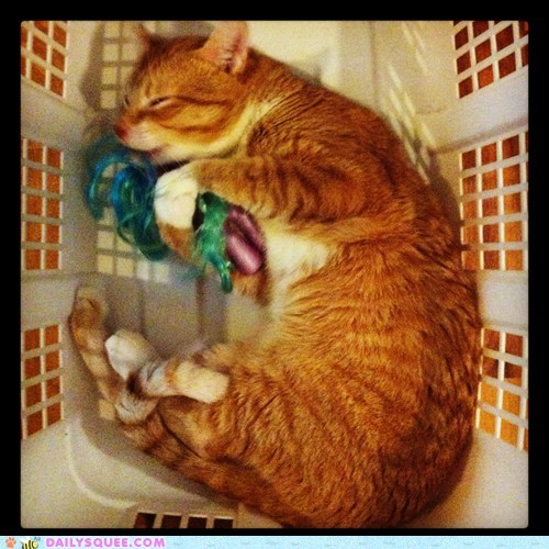 reader squee pets my little pony laundry basket Cats squee brony - 6935446272