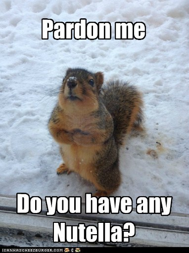 hungry,best,asking,pardon me,snow,nutella,squirrels