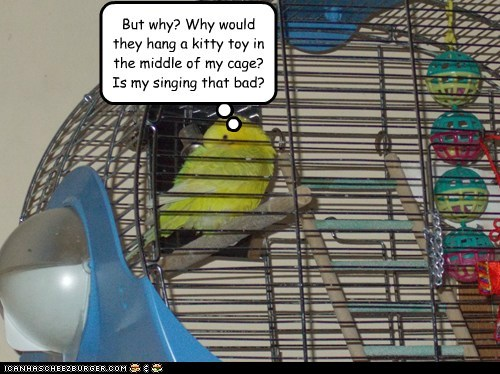 parakeets,birds,singing,cage,scared,cat toys