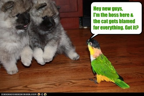 Hey new guys, I'm the boss here & the cat gets blamed for everything. Got it?