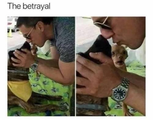 funny memes Memes animal memes animals - 6935557