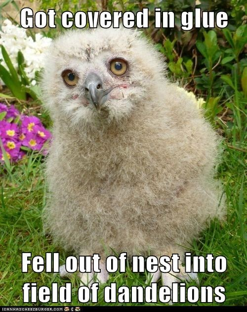 glue nest birds dandelions Fluffy feathers fell - 6935633408