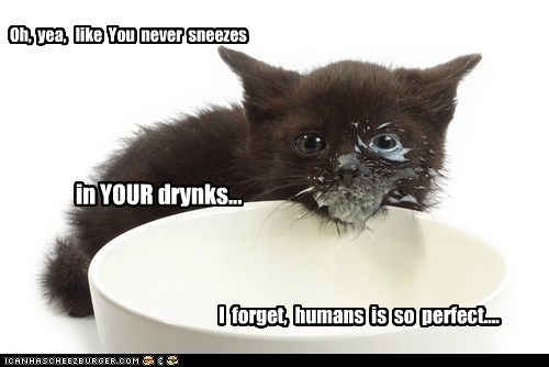 cat milk kitten kitty food animal funny - 6935775744