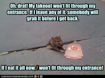 crack fit rats fat stuck food - 6935996416