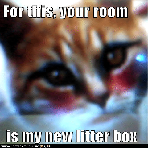 For this, your room   is my new litter box