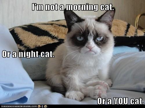 cat tardar sauce Grumpy Cat funny - 6936703744