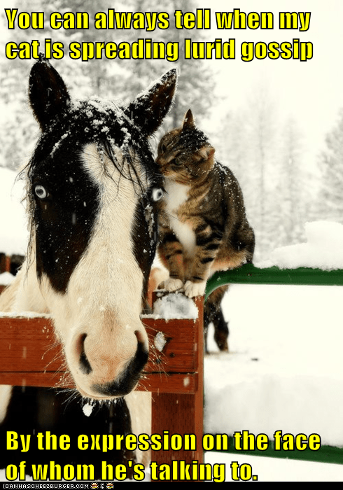 cat secrets winter animal funny horse gossip