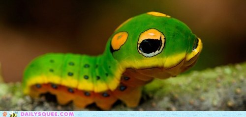 caterpie,insects,Pokémon,bug,creepicute,squee,caterpillar