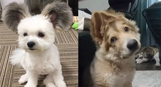 adorable dogs with floppy fluffy ears