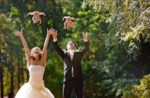 freedom,fly,chicken,wedding photos