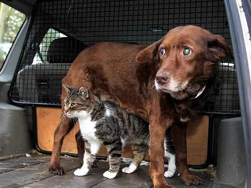 dogs Interspecies Love people pets blind around the interwebs Cats