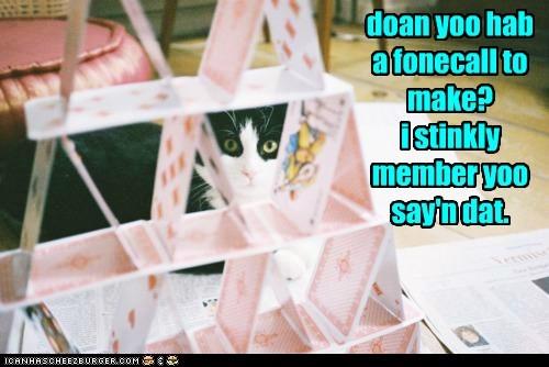 cat doom accident funny - 6938021376