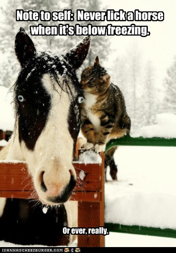 ever,freezing,stuck,licking,horses,Cats