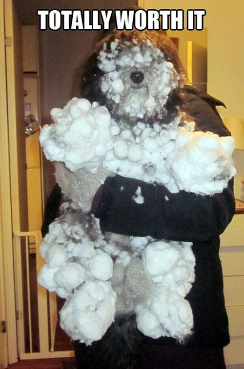 dogs worth it snow captions snowballs matting messy - 6938112000