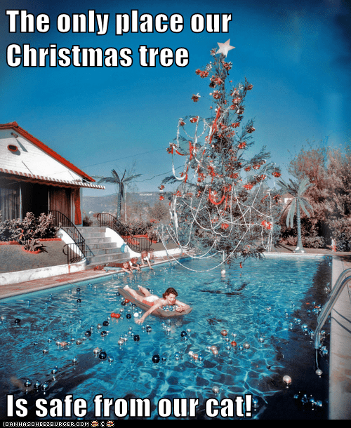 cat,water,christmas tree,pool,silly