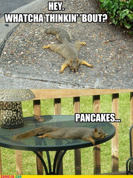 whatcha thinkin bout,squirrels,pancakes