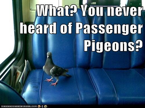 never heard of it,passenger,riding,pigeons,bus