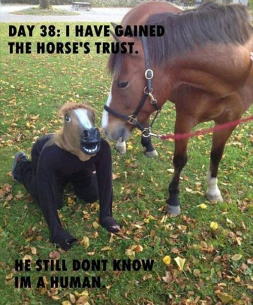 disguise,human,horse mask,horses,trust,they suspect nothing