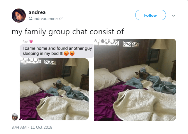 phone group chats family chats family texting animals - 6938629