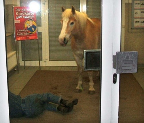 drunk,what,passed out,weird,horse