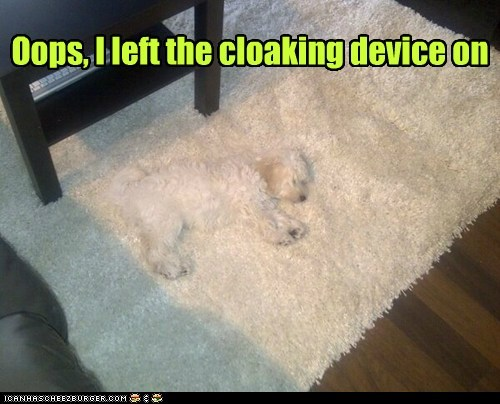 camouflage dogs cloaking device carpet invisible what breed