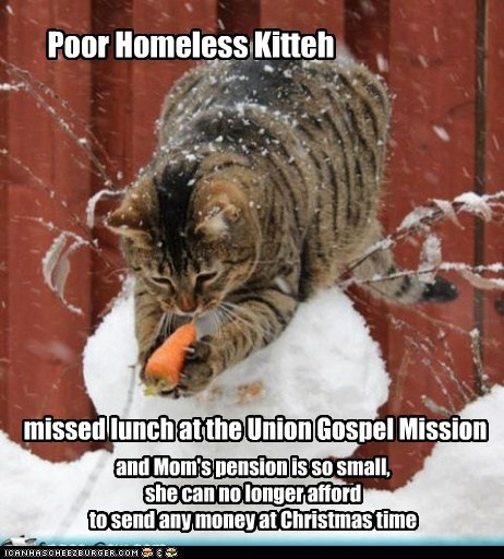 Poor Homeless Kitteh