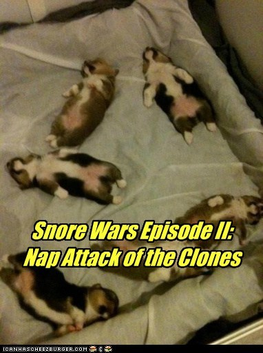 dogs,star wars,puppies,napping,clones,sleeping,corgis