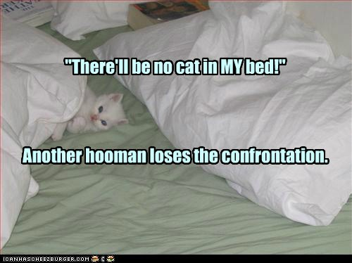 """There'll be no cat in MY bed!"" Another hooman loses the confrontation."