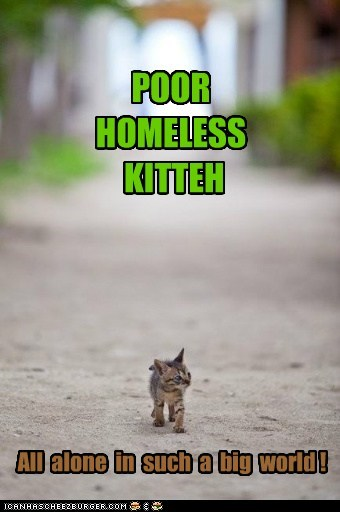 POOR HOMELESS KITTEH All alone in such a big world !